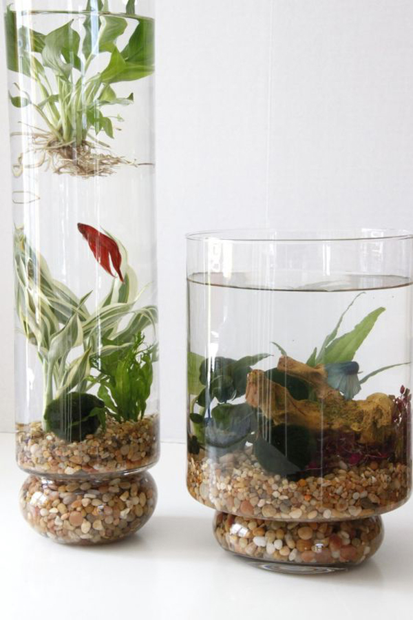 15 diy indoor water garden ideas home design and interior for Growing plants with fish
