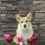 valentine-day-dog-scarf-collars