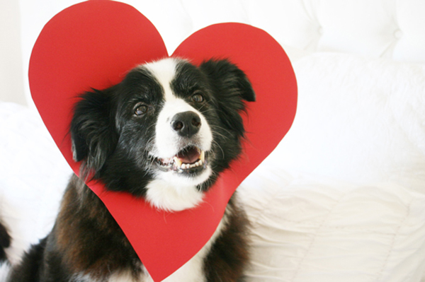 20 most cutest valentine's day dogs | home design and interior, Ideas