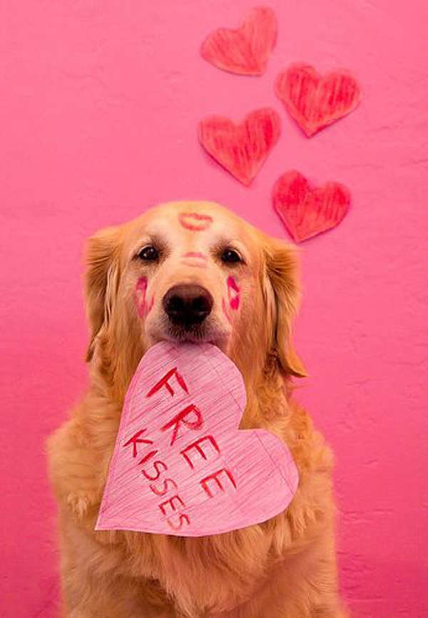 20 Most Cutest Valentines Day Dogs Home Design And Interior