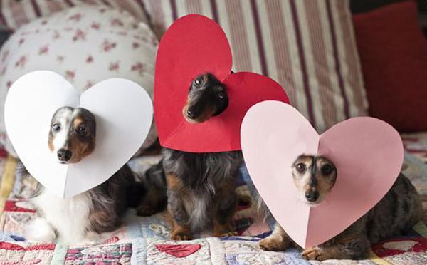 essay heart of a dog