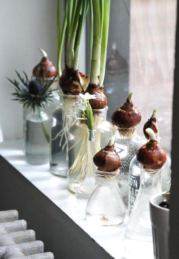 15 DIY Indoor Water Garden Ideas Home Design And Interior