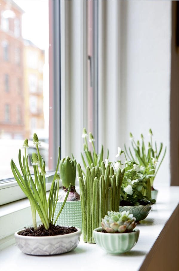 indoor succulent garden window