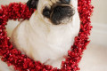 love-diy-garland-valentine-pug