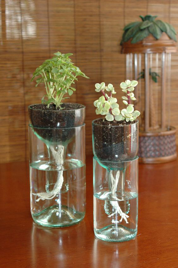 indoor water garden jars