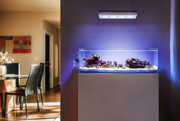 Image gallery modern aquariums for Aquarium interior designs pictures