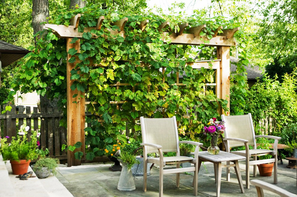 grape arbor here are 20 beautiful and natural grape arbor ideas to