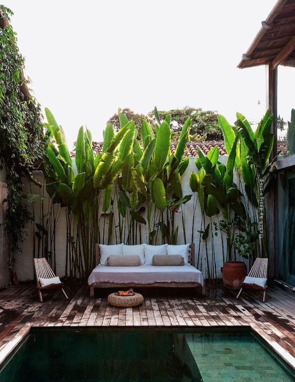 Tropical backyard plunge pool for Gorgeous small backyards