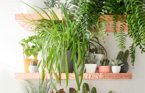diy-copper-plant-rack-shelves