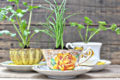 vintage-teacup-herb-favor-pots