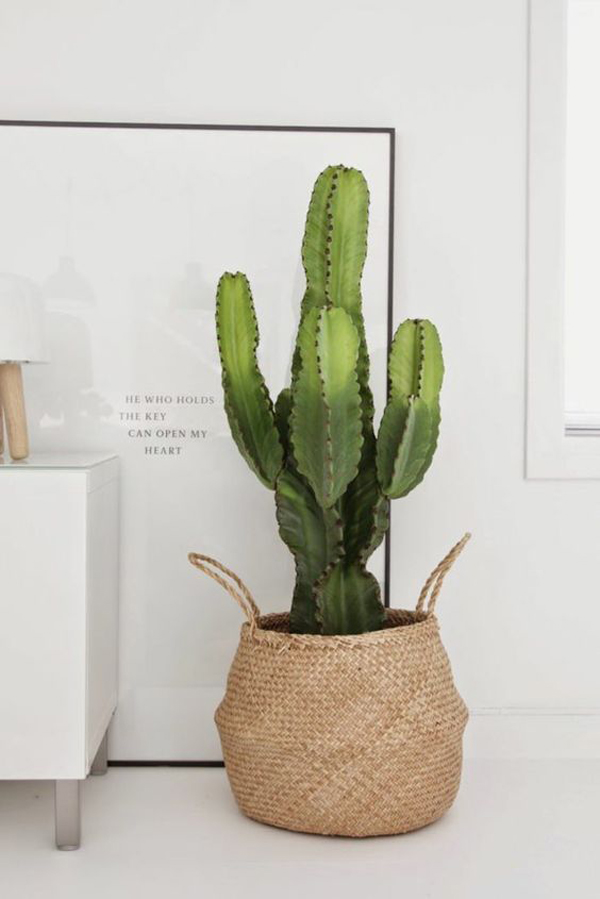 20 simple cactus ideas for beautify your room home design and