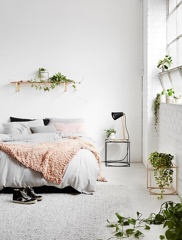 Modern Indoor Succulent In Bedroom Homemydesign
