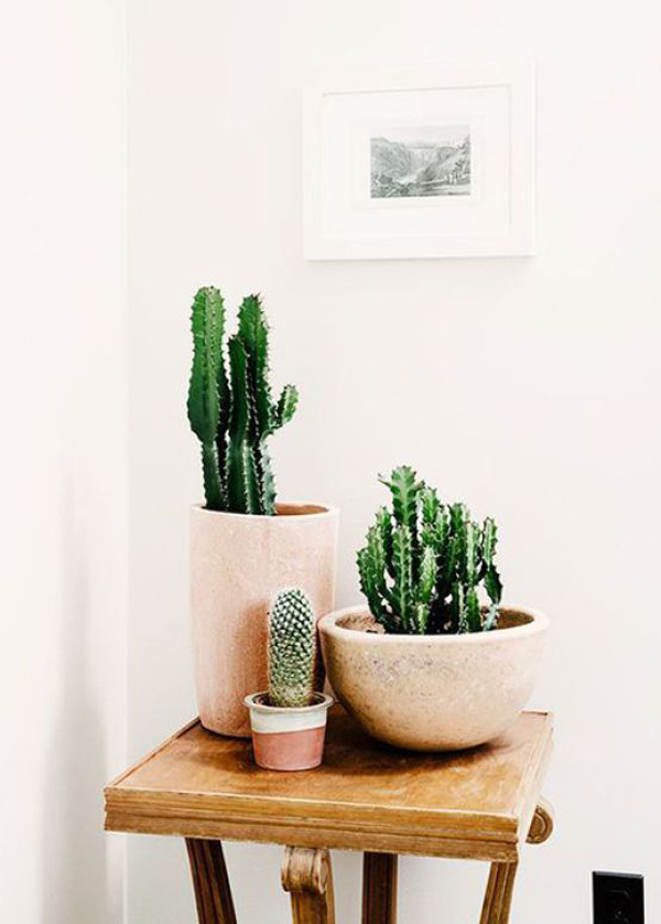20 simple cactus ideas for beautify your room home design and interior. Black Bedroom Furniture Sets. Home Design Ideas