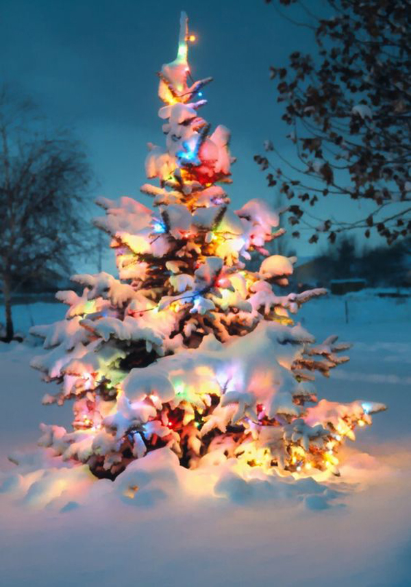 10 natural outdoor christmas tree decorations - Outdoor Christmas Trees
