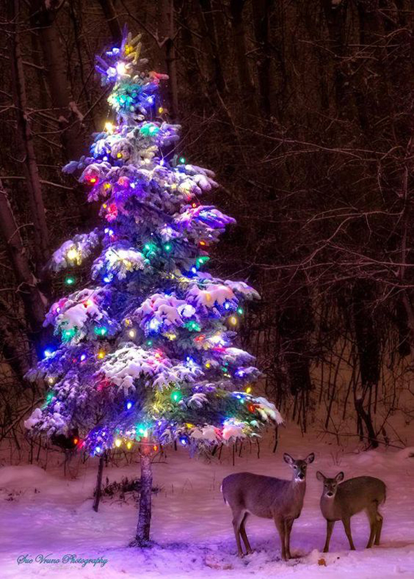 put them on your patio with carts and decorate with ornaments or wreaths take a look at the idea of following natural christmas tree and get more