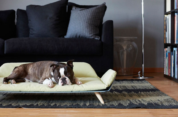 Modern Dog Bed Furniture