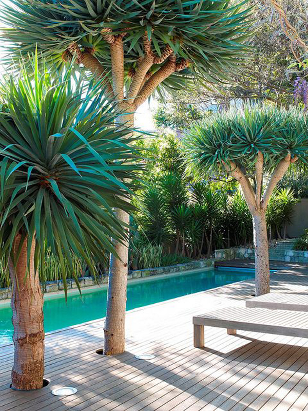 You Might Also Like.. Outdoor Swimming Pool Design ...  Narrow Pool Designs