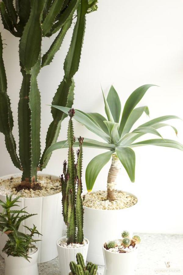 20 beautiful indoor plants with desert atmosphere home design and interior - Pretty indoor plants ...