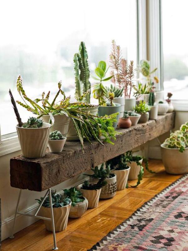 20 beautiful indoor plants with desert atmosphere home - Indoor plants decoration ideas ...