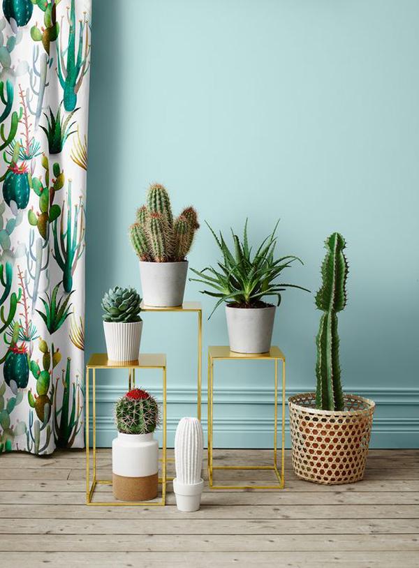 20 Beautiful Indoor Plants With Desert Atmosphere ...