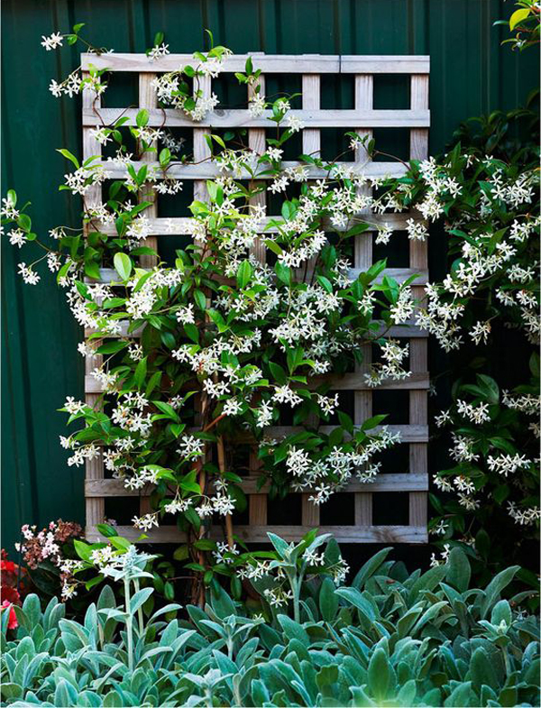 Small Trellis Ideas Part - 42: Homemydesign.com