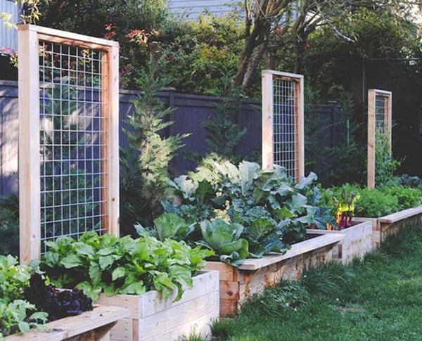 modern-diy-garden-trellis-ideas