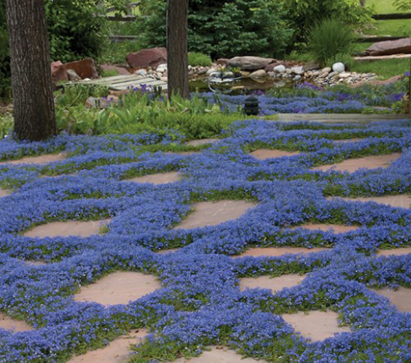 15 Beautiful Plants And Ground Cover For Garden Pathways Home Design