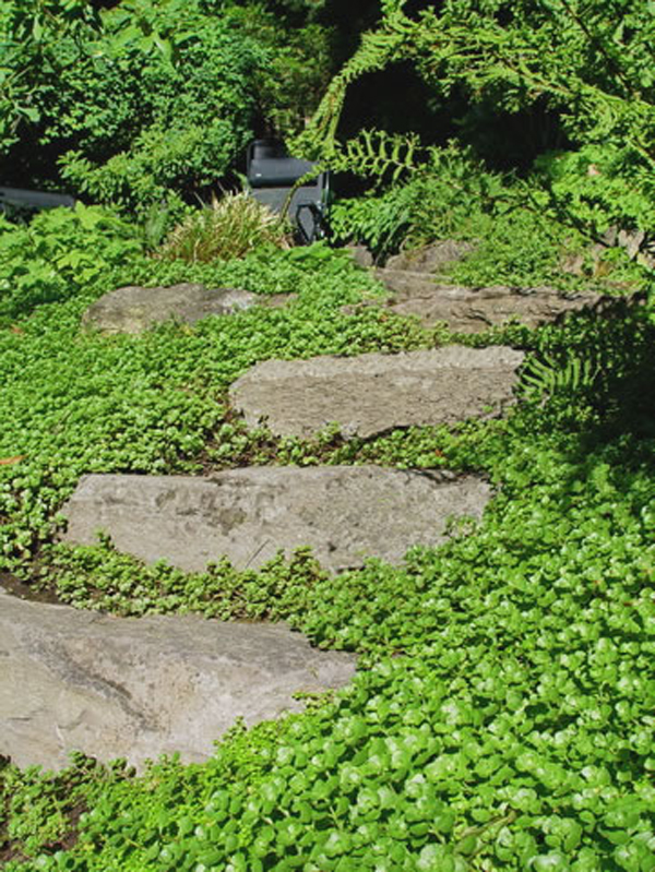 15 Beautiful Plants And Ground Cover For Garden Pathways