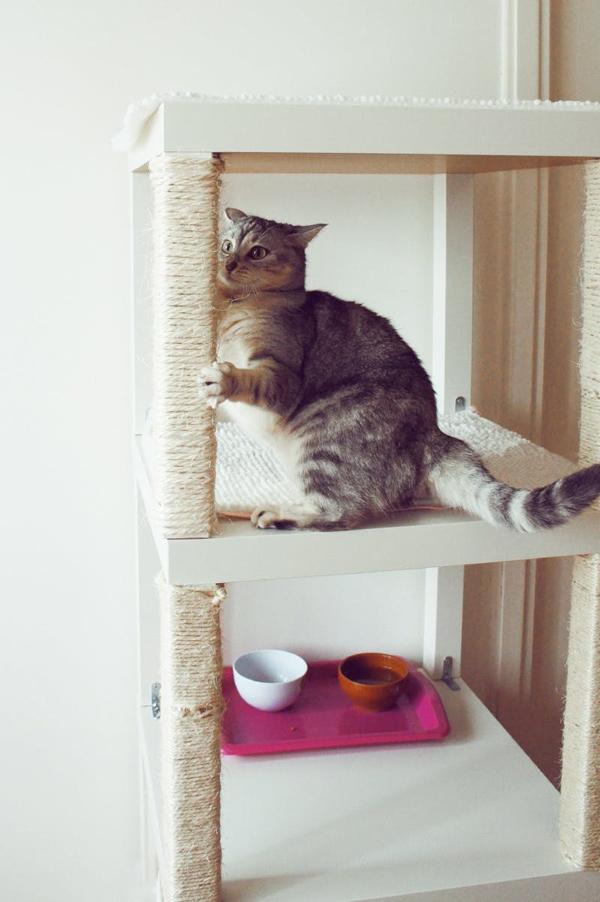 Cat Scratching Around Food Bowl