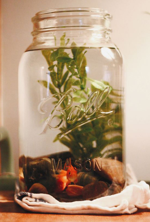 15 Awesome Diy Fish Tank With Mason Jar Ideas Home