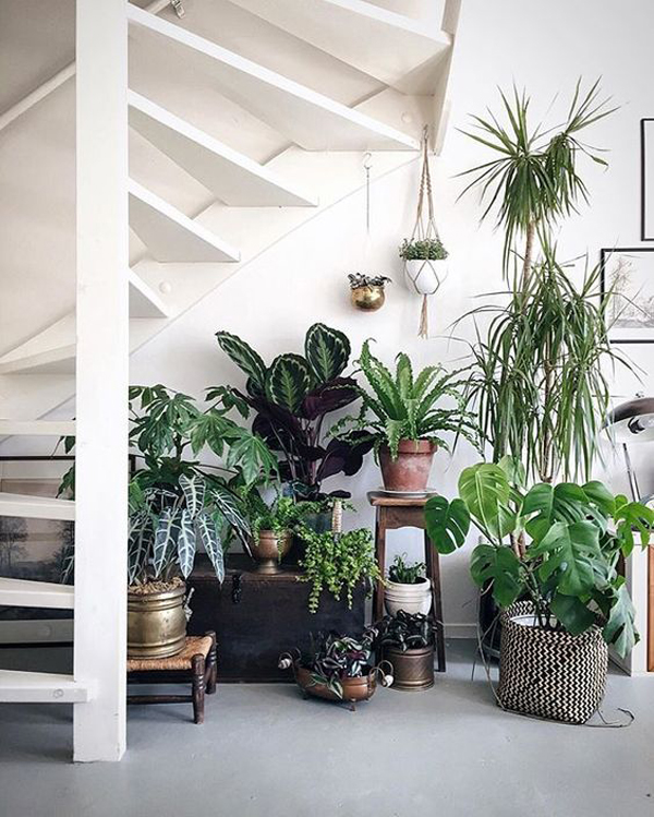 15 Beautiful Indoor Plants In Under The Stairs
