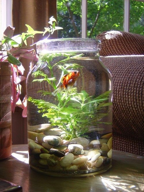Large Creative Mason Jars Fish Tank Ideas