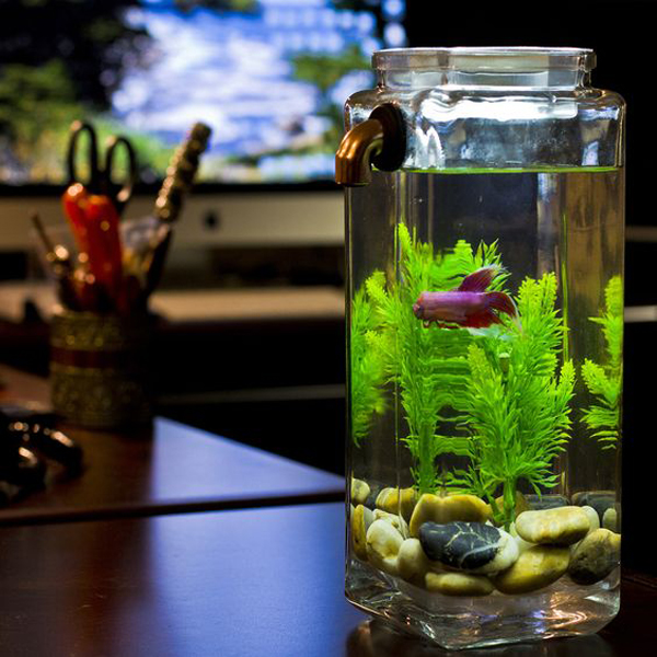 15 Awesome Diy Fish Tank With Mason Jar Ideas Home