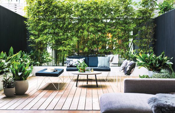 Minimalist Outdoor Patio Decking With Bamboo Plants Homemydesign