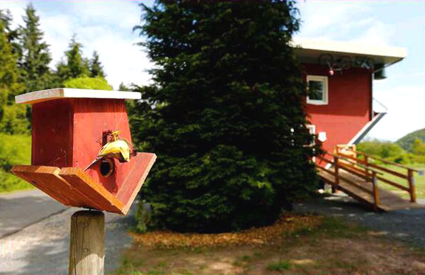 25 Unbelievable Upside-Down Houses With Creative Design