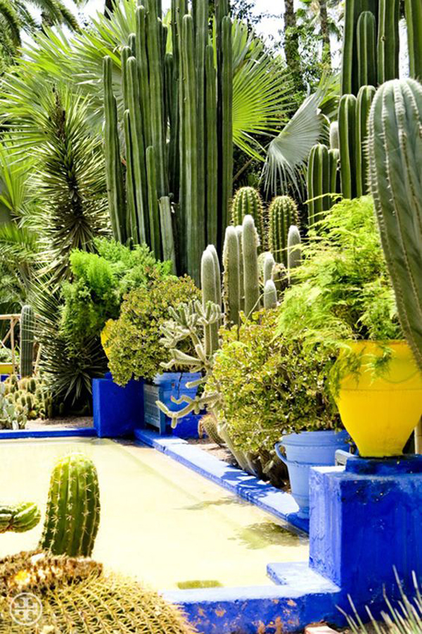 Gorgeous Desert Cacti And Succulent Landscaping Ideas Homemydesign