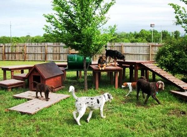20 Creative DIY Dog Playground In The Backyard