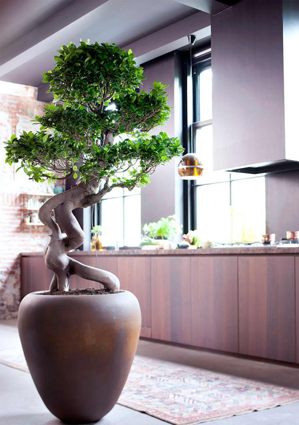 Large Living Room Design Ideas: 25 Modern Bonsai Garden Ideas For Your Interior