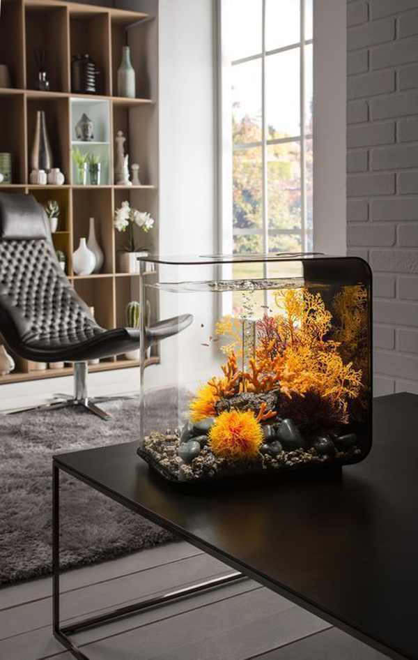 35 Modern Mini Aquarium Designs For Your Small Spaces