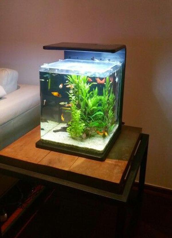 small-aquarium-design-for-living-room - HomeMydesign