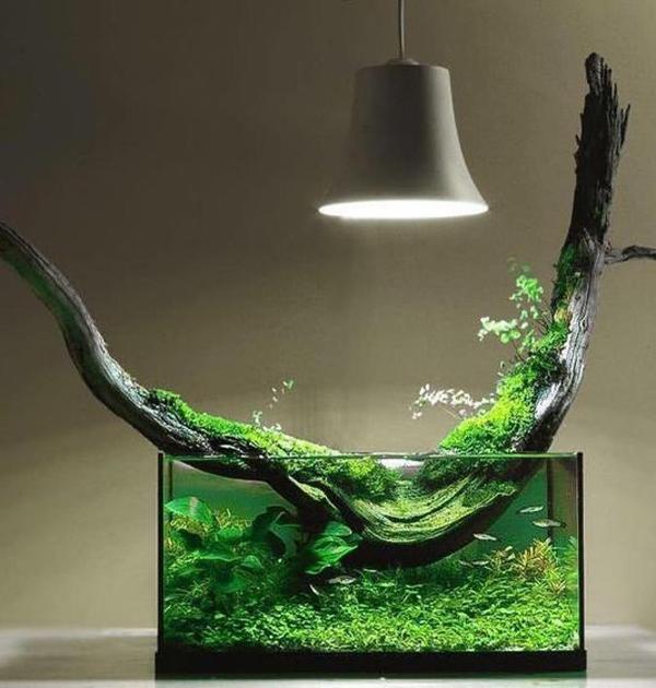 35 Modern Mini Aquarium Designs For Your Small Spaces