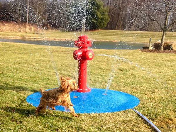 fun-diy-dog-water-park-in-backyard - HomeMydesign