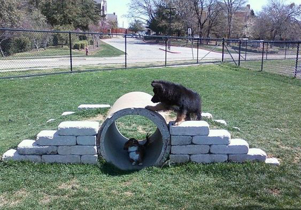 34 Simple DIY Playground Ideas For Dogs | HomeMydesign