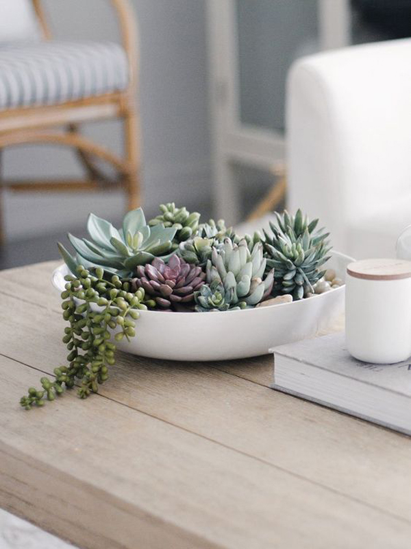38 Indoor Succulent Display Ideas To Beautify Your Home