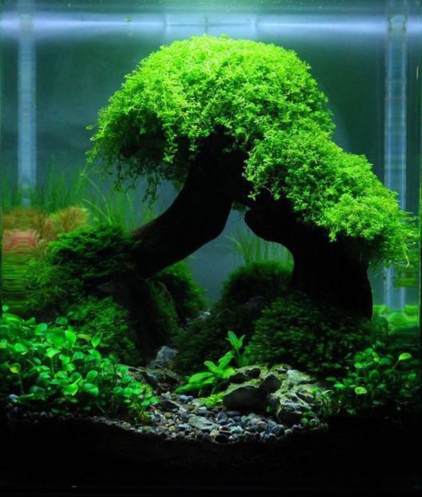 Nature Aquascape Design With Bonsai Tree Homemydesign