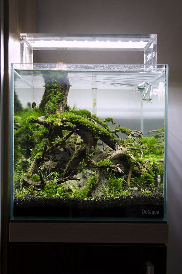Nature Inspired Aquascape Ideas For Your Aquarium Homemydesign