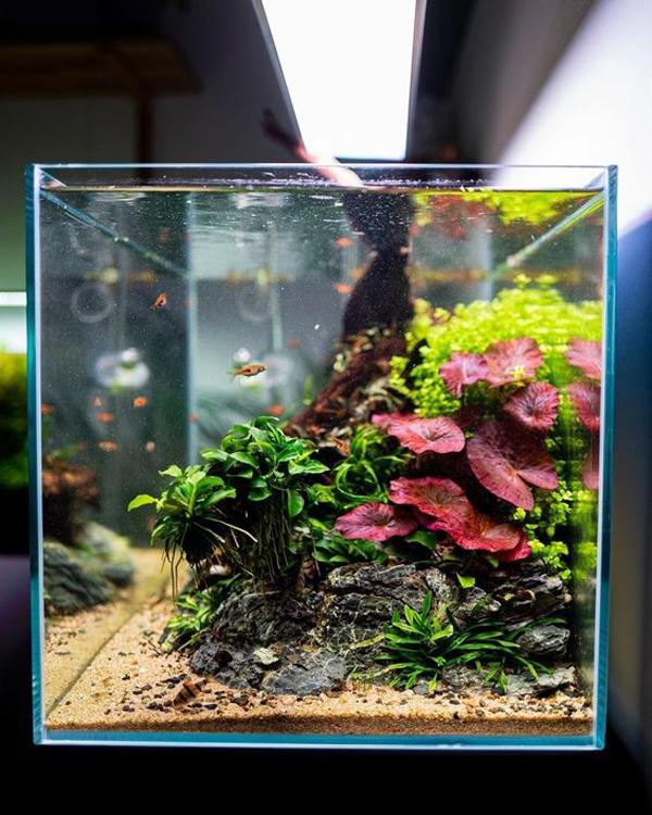 Pretty Aquascape Floral Design Ideas Homemydesign