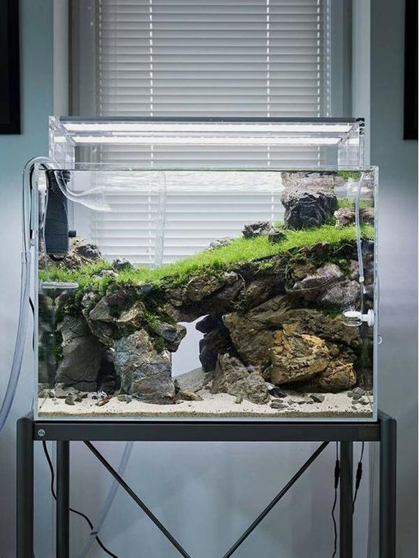 27 Easy DIY Aquascape Design On Low Budget