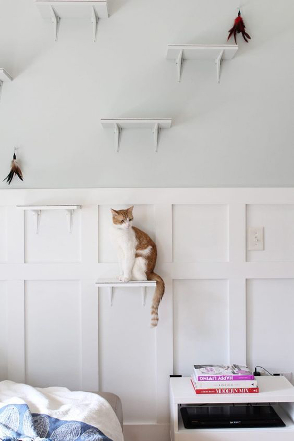30+ Easy DIY Cat Shelves Ideas That Will Wow Them