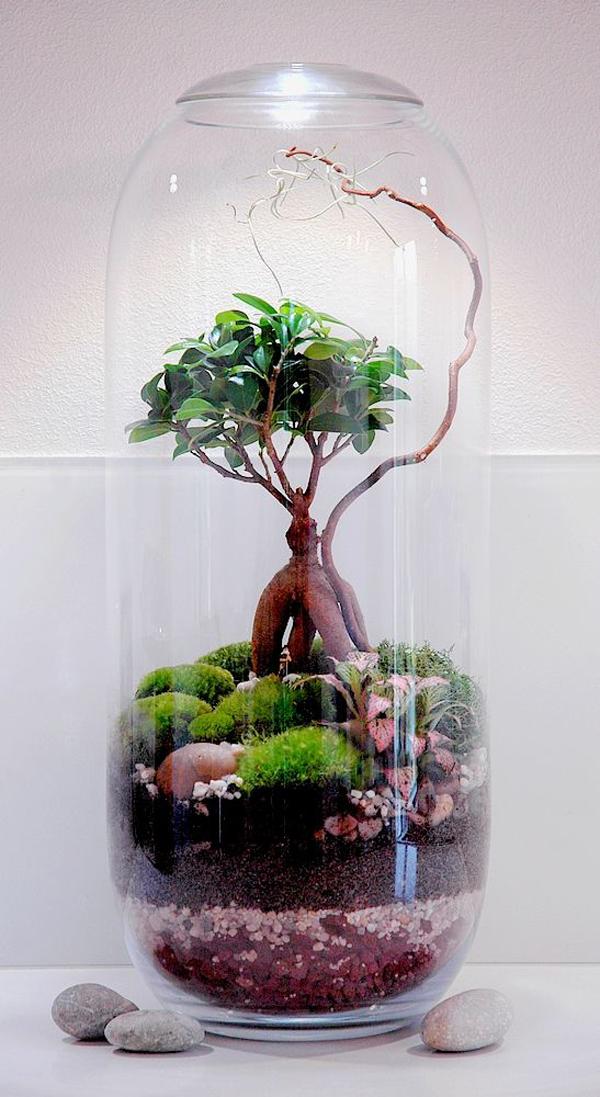 Bonsai Terrarium With Moss In Bottle Homemydesign